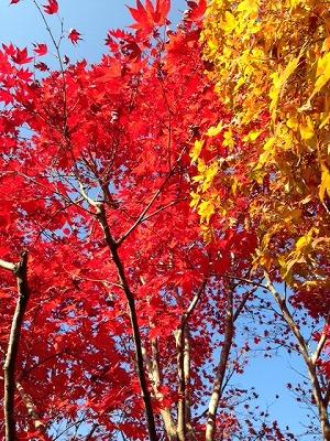2014.11.22京都綾部2 (2).jpg