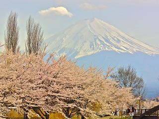 Mt._Fuji_&_Sakura_(2)[1].jpg